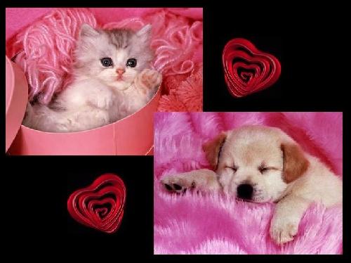 Kdo pr frutipink - Photo de chien et chat mignon ...